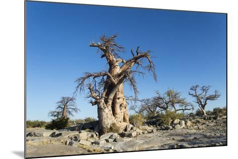 Baobab Trees, Kubu Island, Botswana-Paul Souders-Mounted Photographic Print