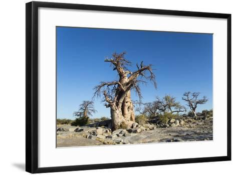 Baobab Trees, Kubu Island, Botswana-Paul Souders-Framed Art Print