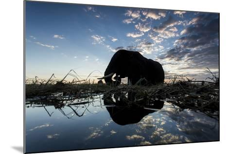 African Elephant, Chobe National Park, Botswana-Paul Souders-Mounted Photographic Print