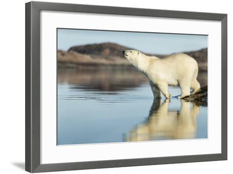 Polar Bear on Harbour Islands, Hudson Bay, Nunavut, Canada-Paul Souders-Framed Art Print