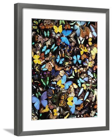 Butterflies-Darrell Gulin-Framed Art Print