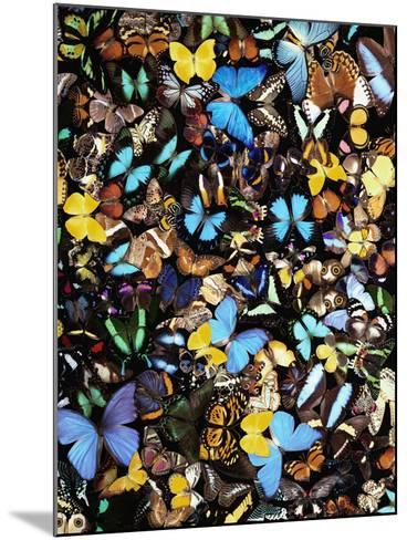 Butterflies-Darrell Gulin-Mounted Photographic Print