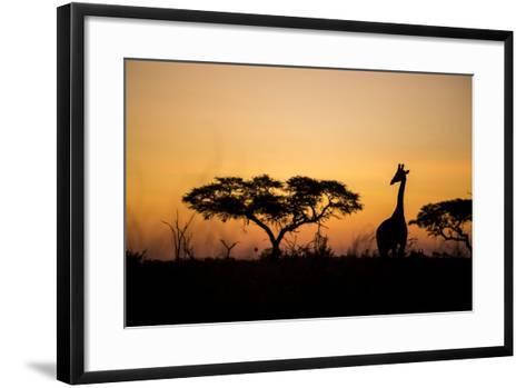 Giraffe at Dusk, Chobe National Park, Botswana-Paul Souders-Framed Art Print