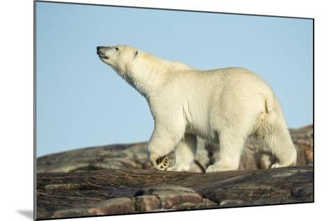 Polar Bear on Harbour Islands, Hudson Bay, Nunavut, Canada-Paul Souders-Mounted Photographic Print