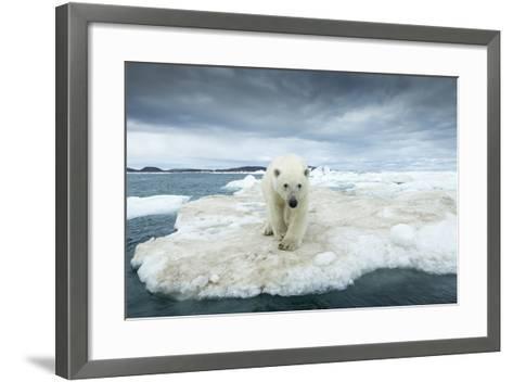Polar Bear on Hudson Bay Pack Ice, Nunavut, Canada-Paul Souders-Framed Art Print