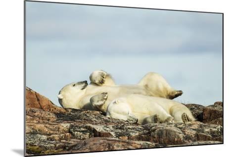 Polar Bears Sleeping on Harbour Islands, Hudson Bay, Nunavut, Canada-Paul Souders-Mounted Photographic Print