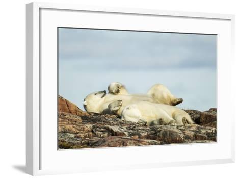 Polar Bears Sleeping on Harbour Islands, Hudson Bay, Nunavut, Canada-Paul Souders-Framed Art Print