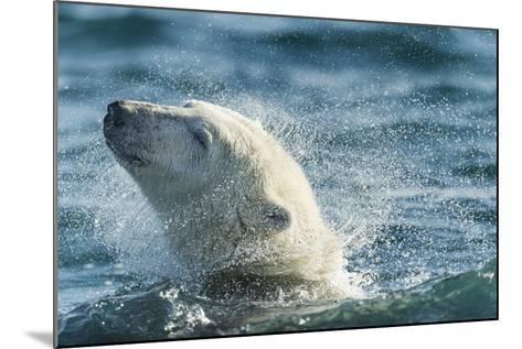 Polar Bear Swimming in Hudson Bay, Nunavut, Canada-Paul Souders-Mounted Photographic Print