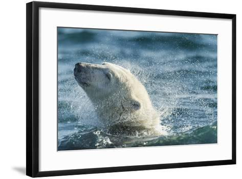 Polar Bear Swimming in Hudson Bay, Nunavut, Canada-Paul Souders-Framed Art Print