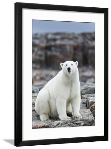 Polar Bear on Harbour Islands, Hudson Bay, Nunavut, Canada-Paul Souders-Framed Art Print