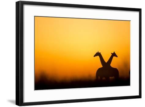 Giraffes, Nxai Pan National Park, Botswana-Paul Souders-Framed Art Print