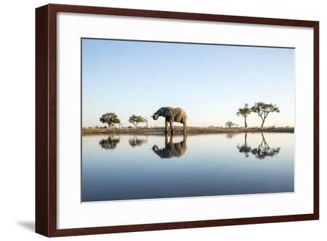 African Elephant, Chobe National Park, Botswana-Paul Souders-Framed Art Print