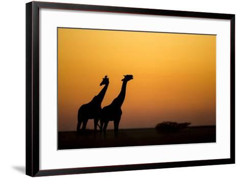 Giraffes, Nxai Pan National Park, Botswana-Paul Souders-Framed Art Print