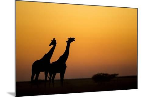 Giraffes, Nxai Pan National Park, Botswana-Paul Souders-Mounted Photographic Print