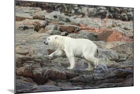 Polar Bear on Harbour Islands, Hudson Bay, Nunavut, Canada-Paul Souders-Mounted Photographic Print