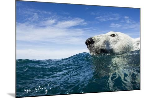 Polar Bear Swimming by Harbour Islands, Nunavut, Canada-Paul Souders-Mounted Photographic Print