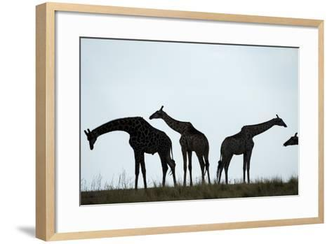 Giraffe Herd, Chobe National Park, Botswana-Paul Souders-Framed Art Print