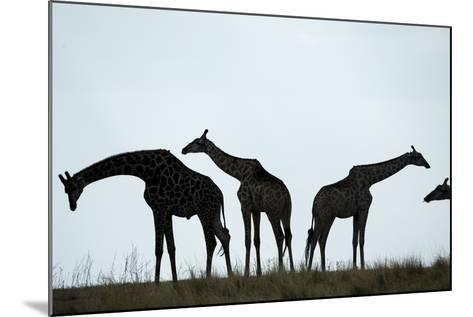 Giraffe Herd, Chobe National Park, Botswana-Paul Souders-Mounted Photographic Print