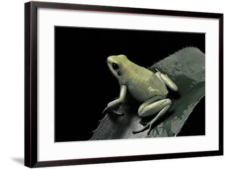 Phyllobates Terribilis F. Mint (Golden Poison Frog)-Paul Starosta-Framed Art Print