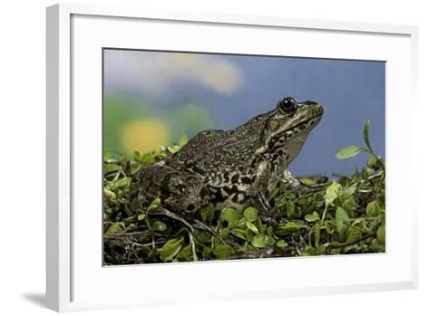 Edible Frog-Paul Starosta-Framed Art Print