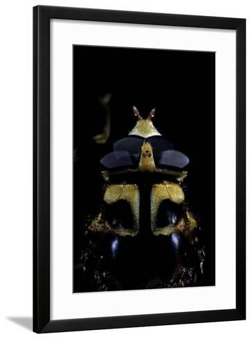 Milesia Crabroniformis (Hoverfly) - Portrait-Paul Starosta-Framed Art Print