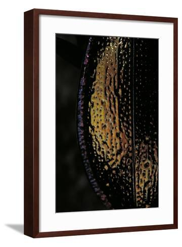 Carabus Hispanus (Ground Beetle)-Paul Starosta-Framed Art Print