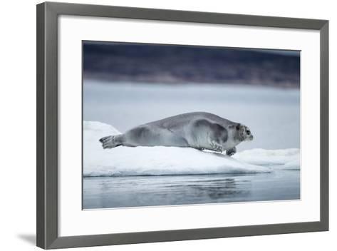 Ringed Seal on Iceberg, Nunavut, Canada-Paul Souders-Framed Art Print