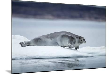 Ringed Seal on Iceberg, Nunavut, Canada-Paul Souders-Mounted Photographic Print
