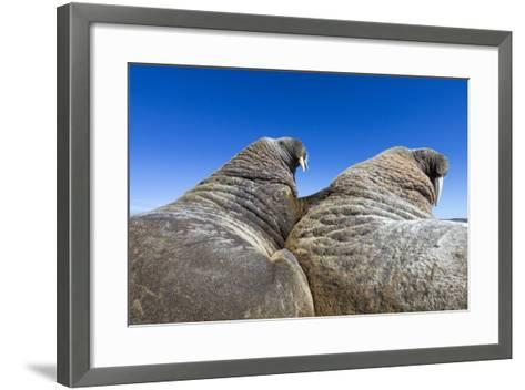 Walruses on Iceberg, Hudson Bay, Nunavut, Canada-Paul Souders-Framed Art Print