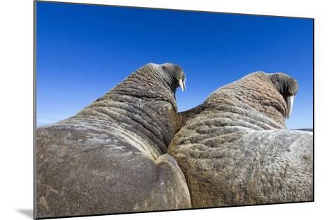 Walruses on Iceberg, Hudson Bay, Nunavut, Canada-Paul Souders-Mounted Photographic Print