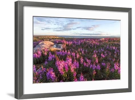 Fireweed, Hudson Bay, Canada-Paul Souders-Framed Art Print