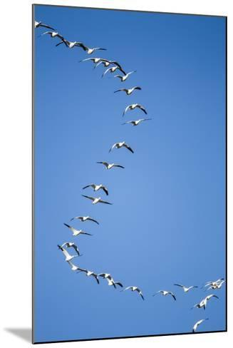 Snow Geese, New Mexico-Paul Souders-Mounted Photographic Print