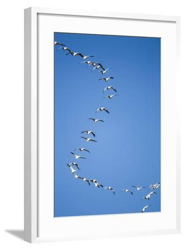 Snow Geese, New Mexico-Paul Souders-Framed Art Print