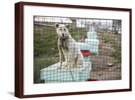 Sled Dog, Rankin Inlet, Nunavut, Canada-Paul Souders-Framed Art Print