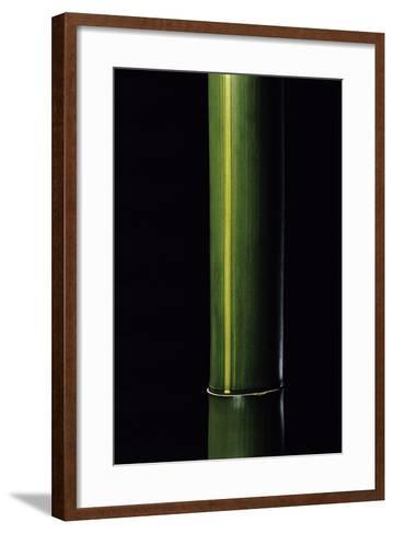 Phyllostachys Viridis 'Houzeau' (Houzeau Bamboo)-Paul Starosta-Framed Art Print