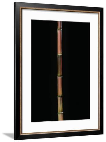 Himalayacalamus Hookerianus 'Damarapa' (Blue Bamboo)-Paul Starosta-Framed Art Print