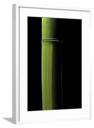 Phyllostachys Viridis (Houzeau Bamboo)-Paul Starosta-Framed Art Print