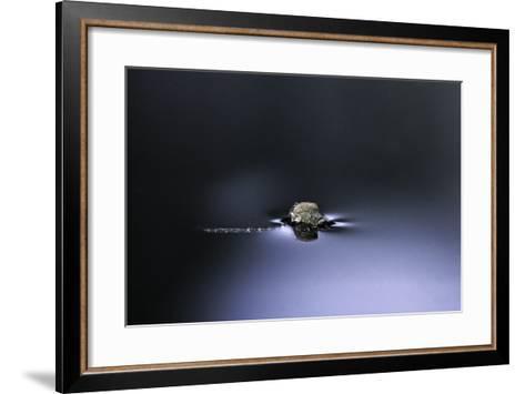 Culex Pipiens (Common House Mosquito) - Emerging (D2)-Paul Starosta-Framed Art Print