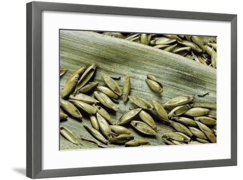Bambusa Arundinacea (Bamboo) - Seeds-Paul Starosta-Framed Art Print