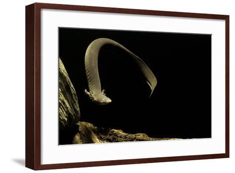 Siren Intermedia (Lesser Siren)-Paul Starosta-Framed Art Print