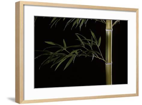 Phyllostachys Pubescens (Mosochiku Bamboo)-Paul Starosta-Framed Art Print
