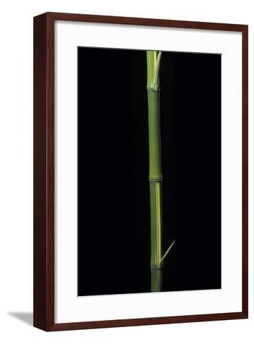 Phyllostachys Bambusoides 'Castillioni-Inversa' (Castillon Bamboo)-Paul Starosta-Framed Art Print
