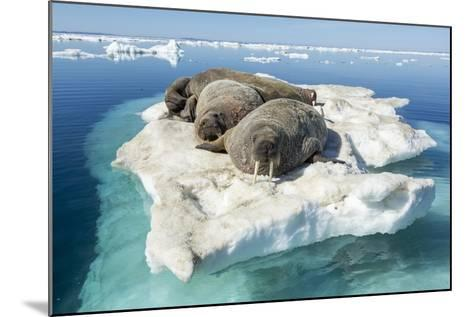 Walruses on Iceberg, Hudson Bay, Nunavut, Canada-Paul Souders-Mounted Photographic Print