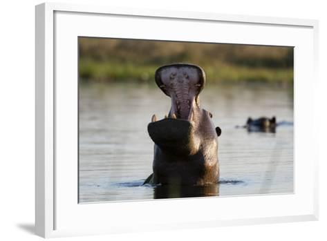 Hippopotamus Yawning-Sergio Pitamitz-Framed Art Print