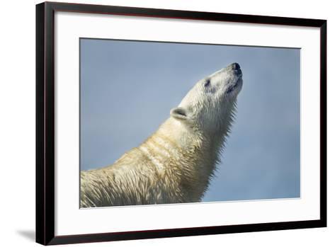 Polar Bear, Hudson Bay, Nunavut, Canada-Paul Souders-Framed Art Print