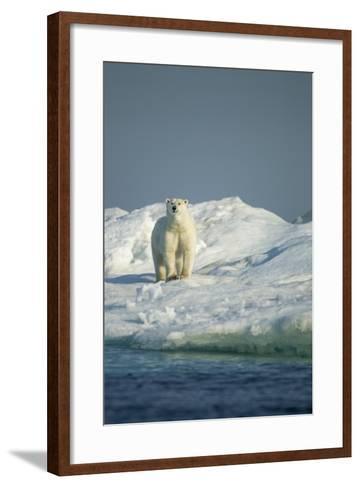 Polar Bear on Iceberg, Hudson Bay, Nunavut, Canada-Paul Souders-Framed Art Print