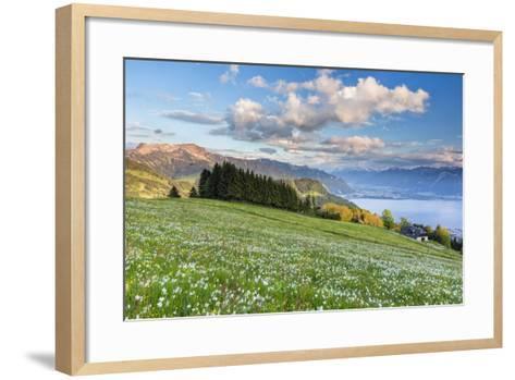 White Daffodil Blooming-Frank Lukasseck-Framed Art Print