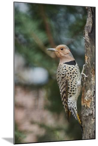Flicker-Gary Carter-Mounted Photographic Print