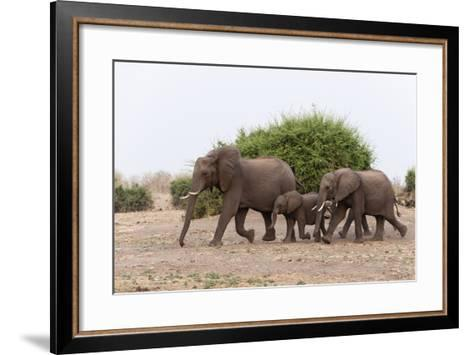 African Elephants and Calf-Sergio Pitamitz-Framed Art Print