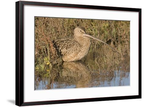 Long-Billed Curlew-Hal Beral-Framed Art Print